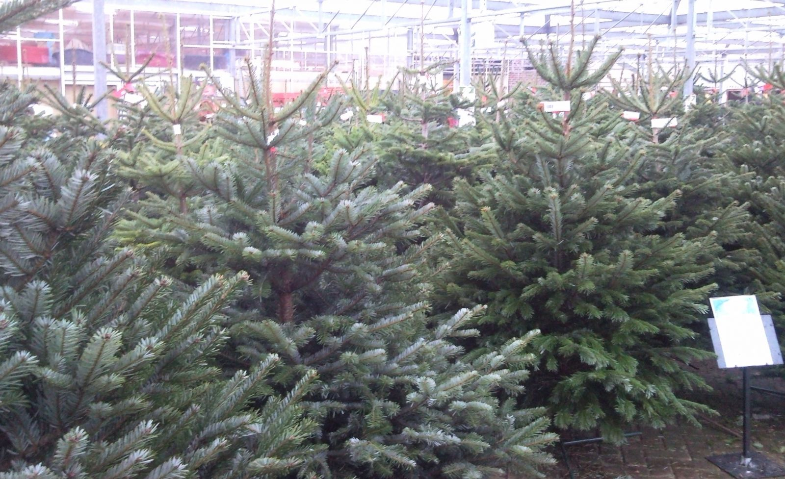 Christmas Trees Horsham