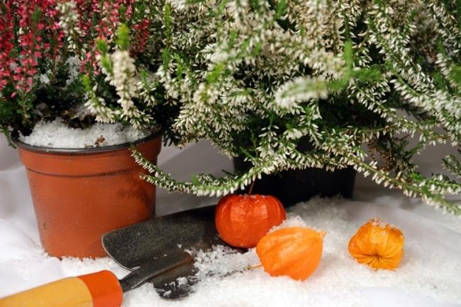 Garden Centre: A Gardener's Christmas Wishlist