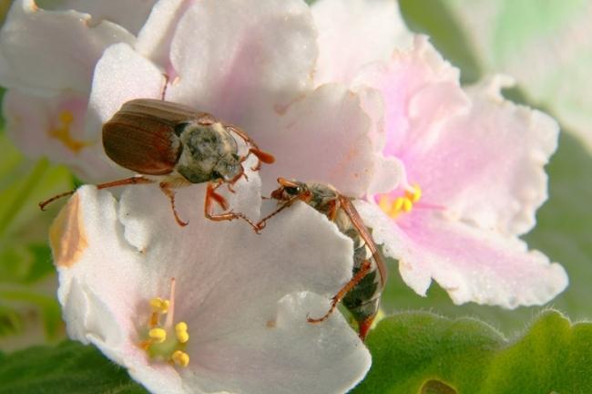 Garden Centre: Keeping Pests Away Naturally