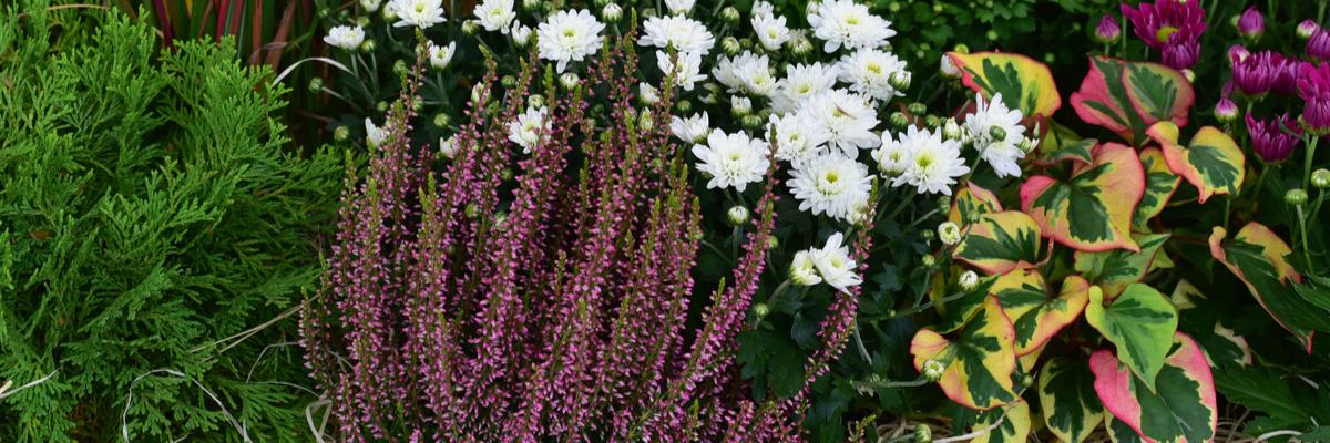 Autumn plants - Rushfields