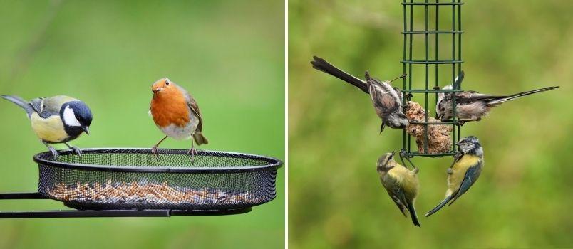 Bird accessories - Rushfields