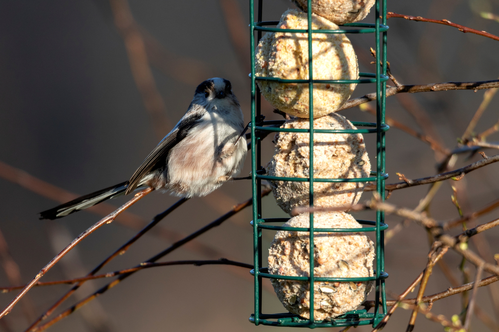 Bird feeder - Rushfields