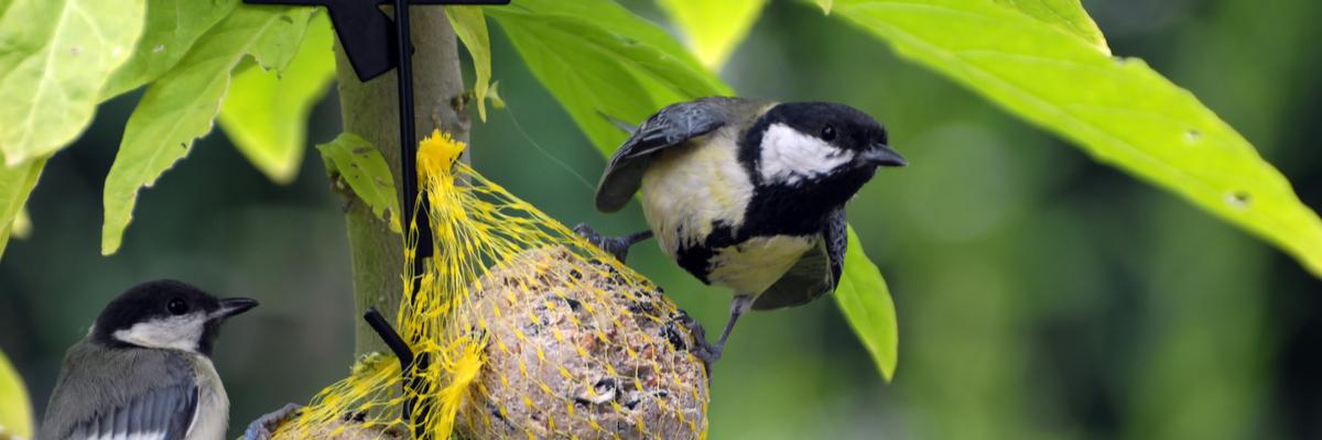 Bird food - Rushfields