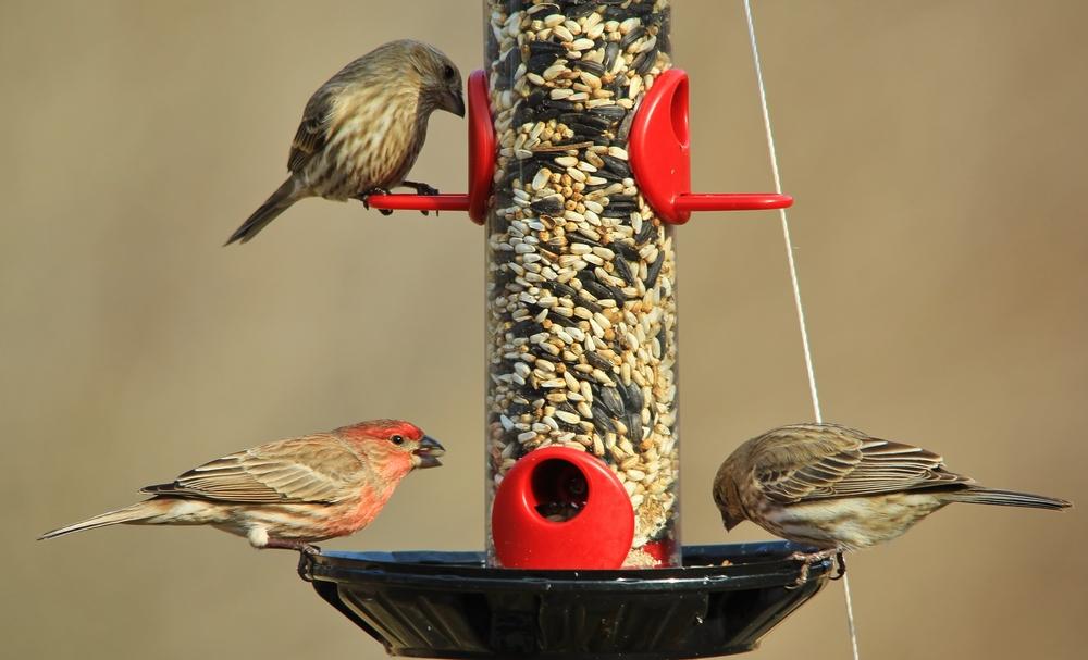 Bird food and feeders - Rushfields
