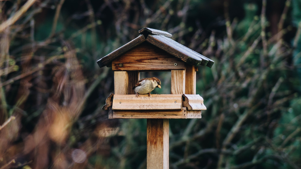 Birdhouses and bird tables - Rushfields
