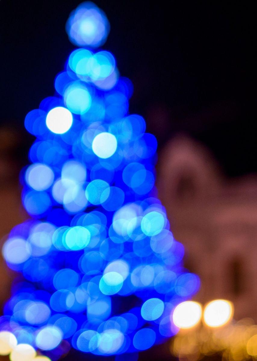 Christmas Trees Brighton