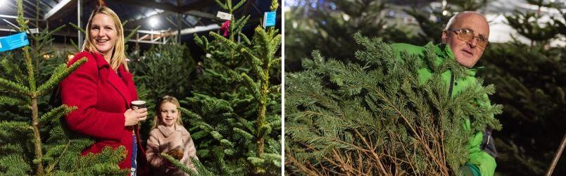 Christmas trees Rushfields