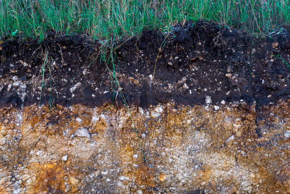 Different types soil - Rushfields