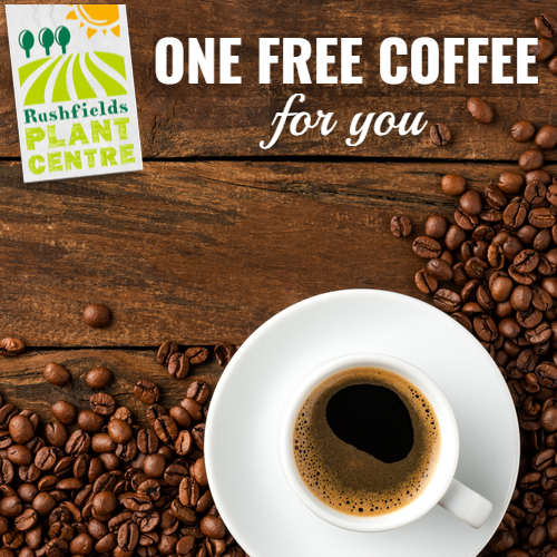 One free coffee - Rushfields