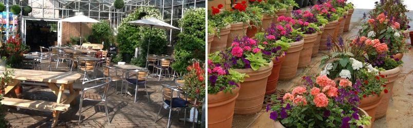 Garden Centre - Rushfields