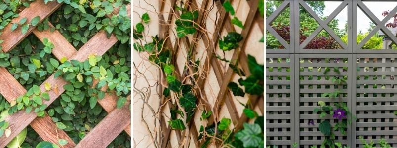 Garden trellis - Rushfields