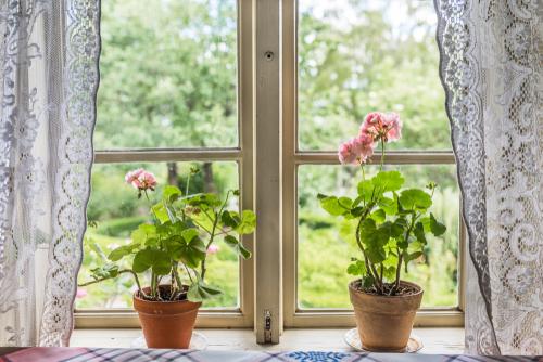 Geraniums flowering houseplants - Rushfields