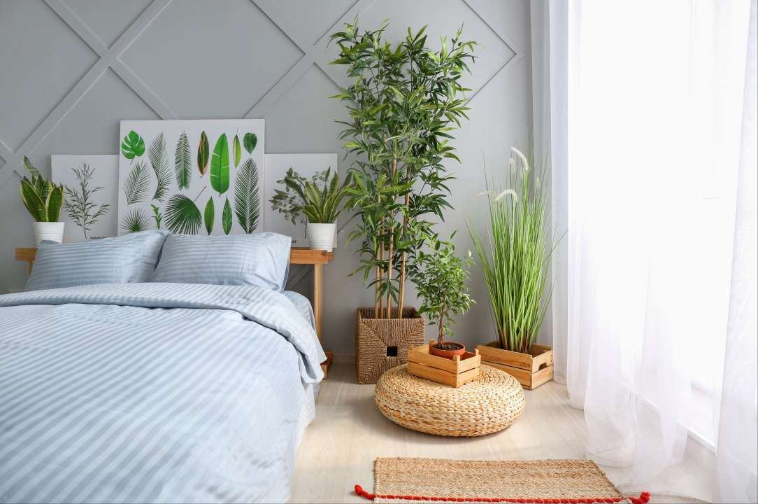 Indoor house plants - Rushfields