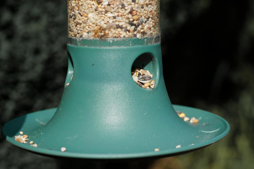 Niger seeds bird feeder - Rushfields