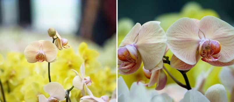 Orchids - Rushfields