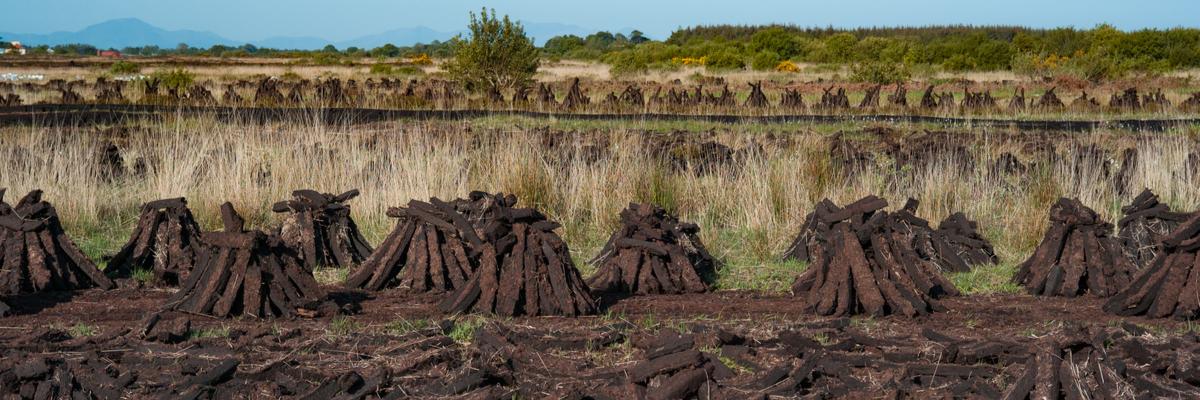 Peat bogs - Rushfields