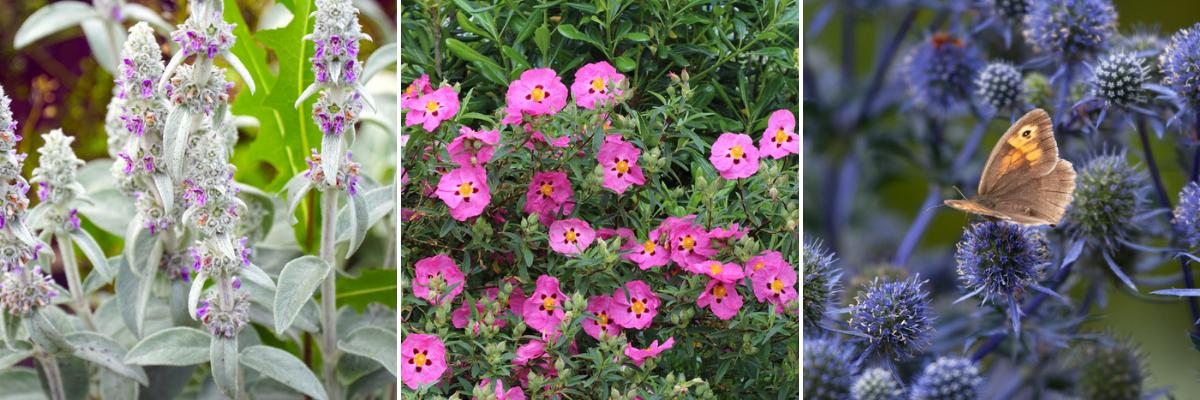 Sun loving plants - Rushfields