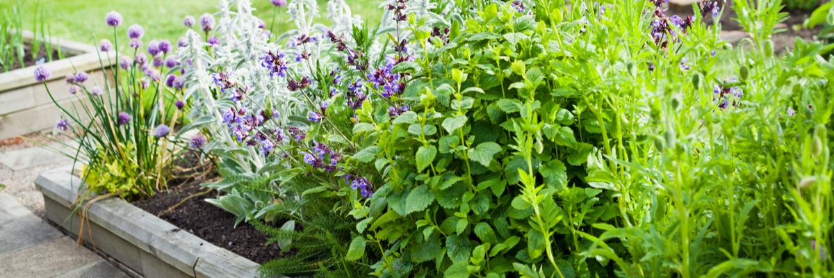 Sun-loving Herbs - Rushfields