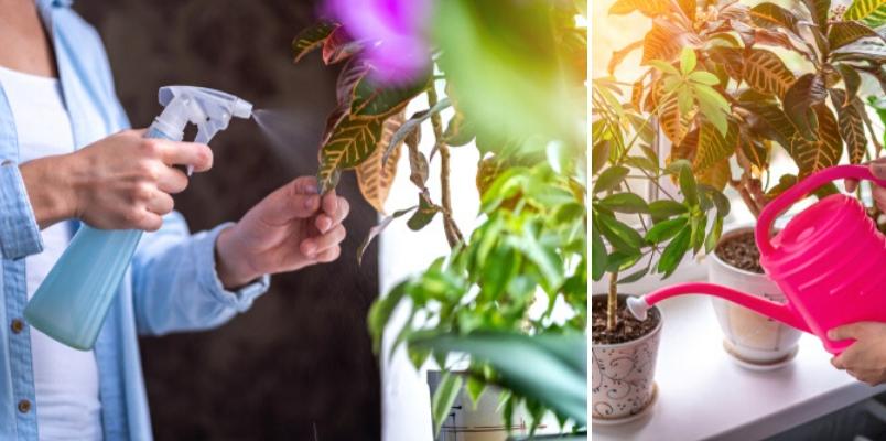 Watering foliage house plants - Rushfields
