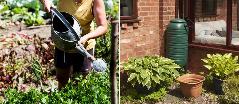 Watering your plants - Rushfields