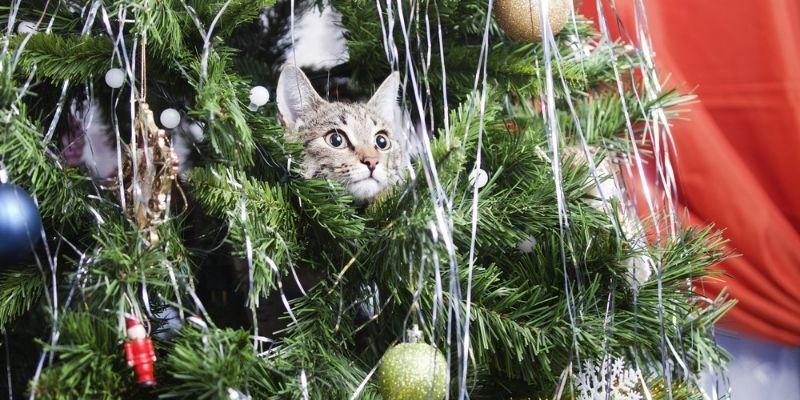 rushfield-christmas-tree