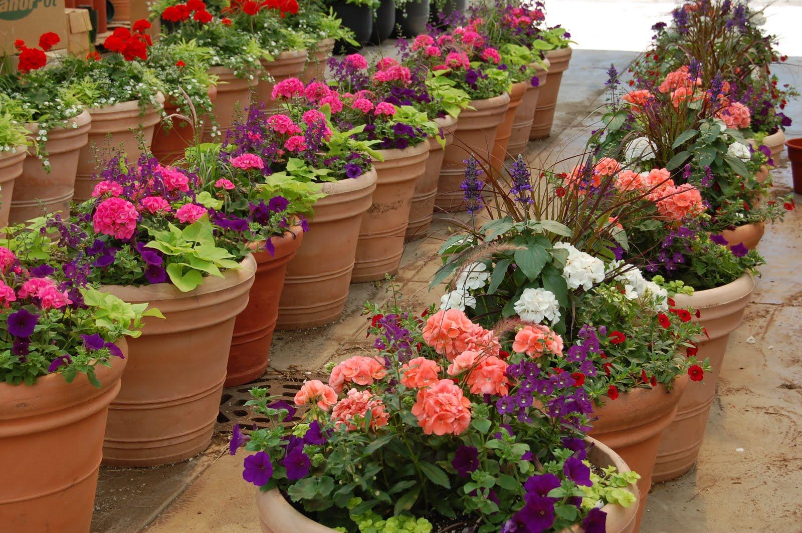 Garden Centre Burgess