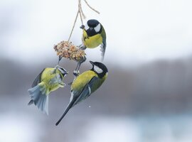 Bird Accessories | Rushfields Plant Centre