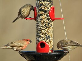 Bird food & bird feeders | Rushfields Plant Centre