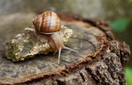 Tackling slugs and snails - Rushfields Plant Centre