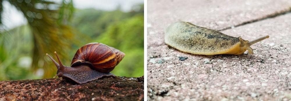tackling-slugs-snails